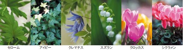 中毒を起こす観葉植物
